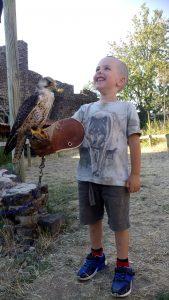bapteme de fauconnier - volerie du forez